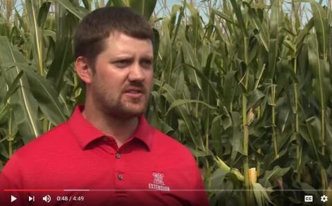 Nebraska Extension Educator Nathan Mueller on estimating corn yields.