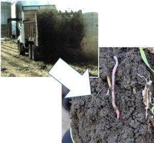 Illustrating improved soil aggregates from manure applications.