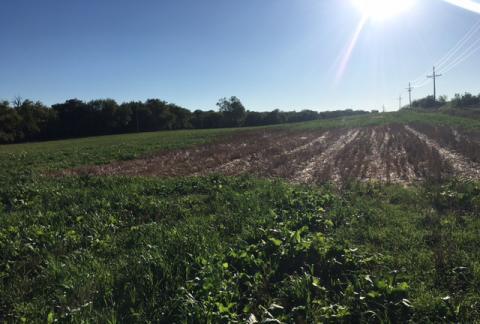 Bohling Farm