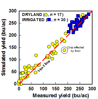 Graph showing simulated corn yields versus measured yield