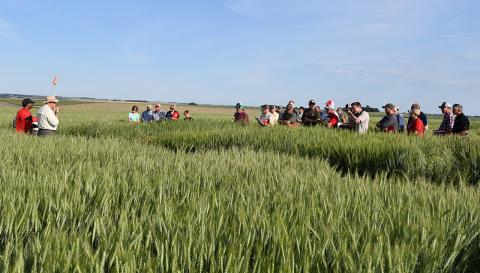 Wheat Field Day