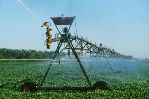 Center pivot irrigated soybeans