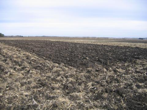 Minnesota tillage plots