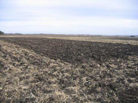 Minnesota tillage plots