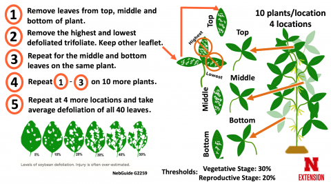 Guide to estimating soybean leaf defoliation