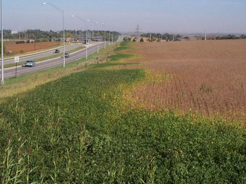 Soybean field with areas of extended growth due to street lights
