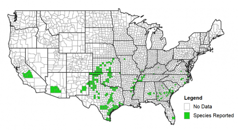 Figure 1. Counties with confirmed sugarcane aphids. Sorghum growers in southeast Nebraska are encouraged to scout for this pest.