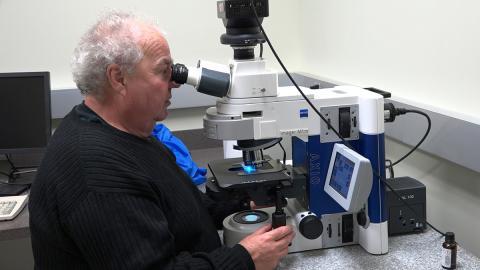 Bernd Friebe, KSU Wheat Genetics Researcher