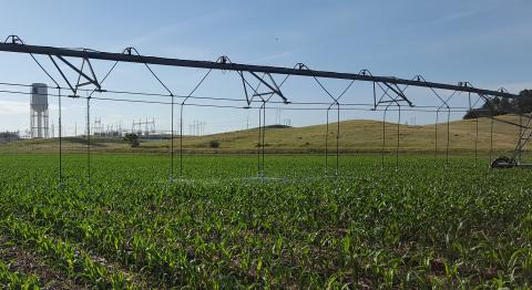 Center pivot irrigating corn