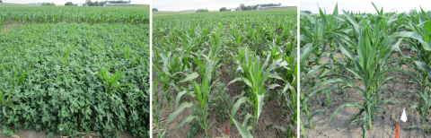Field photos of the three herbicide treatments tested.