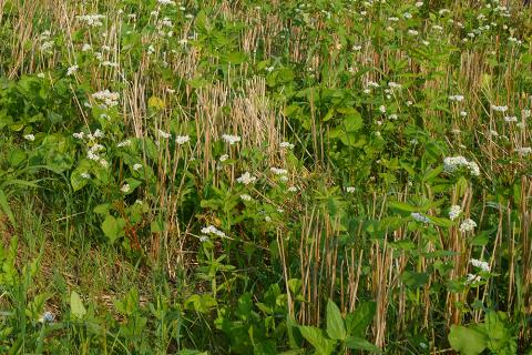 Cover crop plots
