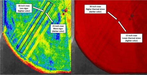 Aerial image of field showing differences between 15-inch and 30-inch row spacings