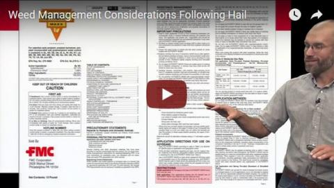 Screen capture from Weed Scientist Chris Proctor's video on managing weeds after hail