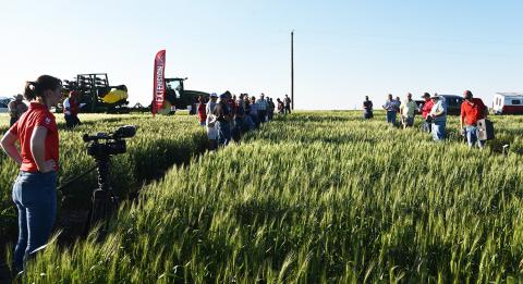 May 30 Nebraska Extension Wheat Field Day in Jefferson County