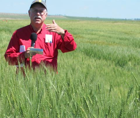 Dr. P. Stephen Baenziger speaking at a wheat variety trial field day at the High Plains Ag Lab near Sidney in 2018.
