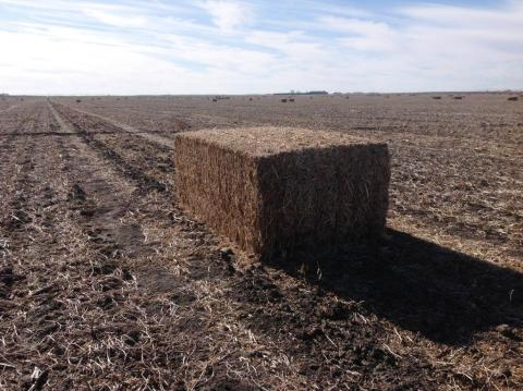Baled soybean residue in a field