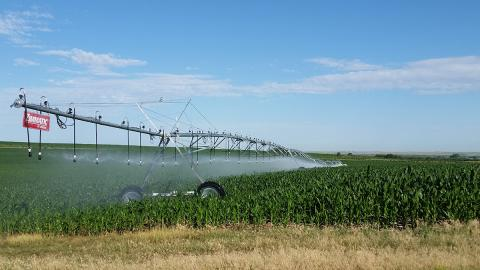 Drop sprinklers on a center-pivot irrigation system in corn