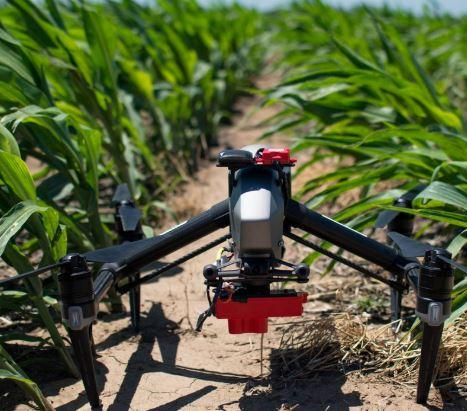 Drone equipped with sensors for assessing nitrogen need