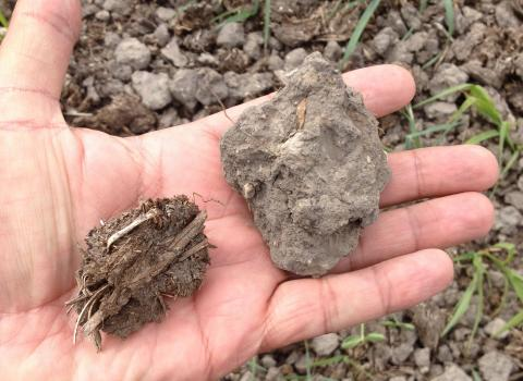 Hand holding two soil types