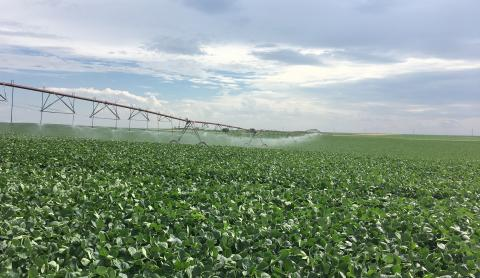 Irrigated soybean field in Perkins County, Nebraska