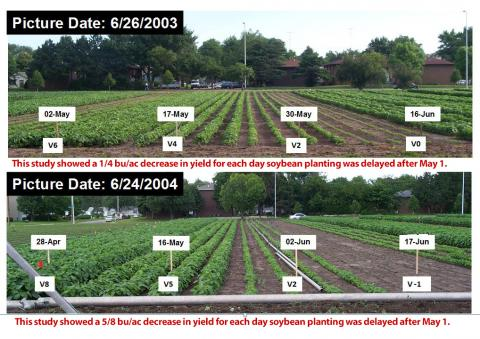 Soybean fields in planting date study at UNL's East Campus