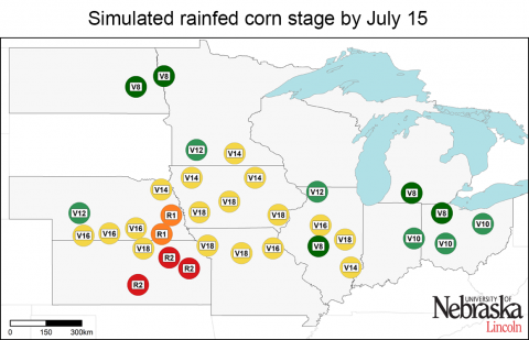 Growth stages of corn at rainfed sites in monitored by Corn Yield Forecast Center