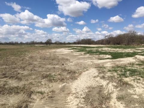 Sand-covered pasture near Ravenna