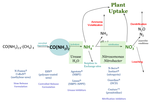 Routes of nitrogen loss in the soil