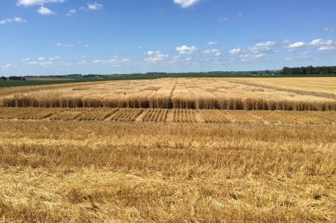 Washington County Winter Wheat Variety Trial