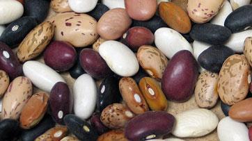 Dry edible beans