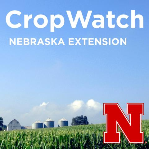 Graphic for the UNL CropWatch Podcast