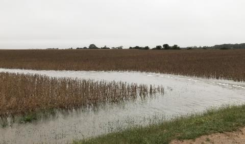 After recent rains, water stands in the border of this Filmore County soybean field. While wet conditions across much of the state will complicate harvest, taking steps to avoid compaction can reduce the challenges for future crops. (Photo by Brandy VanDeWalle)