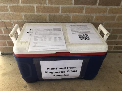 submission cooler outside the plant and pest clinic