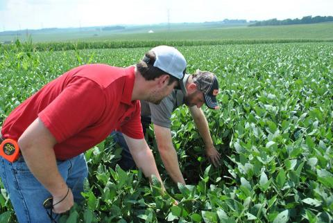 men examine condition of soybeans in field