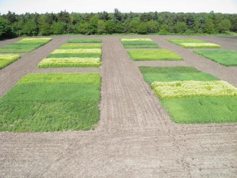 Cover crop research plots in 2017