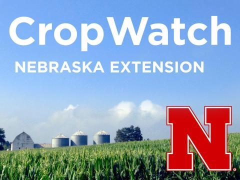 Nebraska CropWatch podcast logo