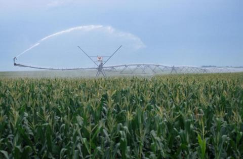 pivot irrigation system operating in a corn field