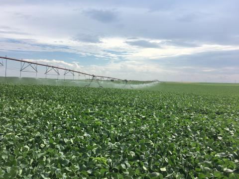 Irrigated soybean in Perkins County, NE (2019).