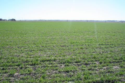 Crop crops in field