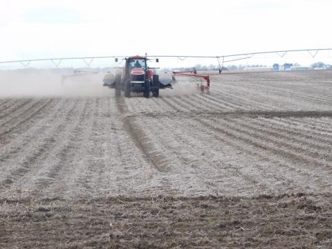 Spring planting in field