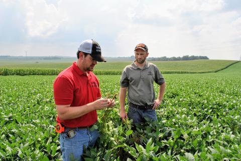 Extension educators analyze soybean field