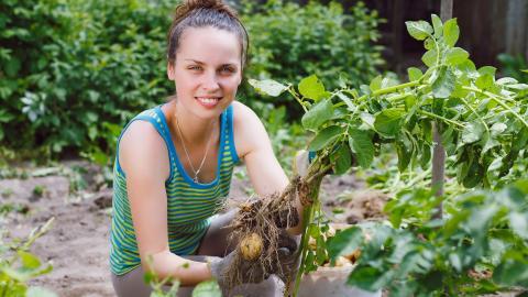 Gardener tending plant