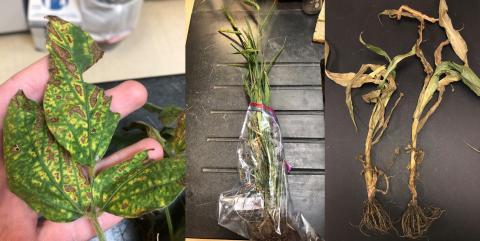 Plant disease photo collage