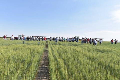 Wheat field day attendees