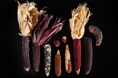 Purple hued corns