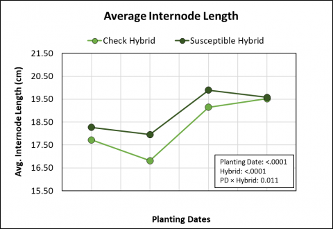 Graph showing the effects of four planting dates and two hybrids on plate internode length.