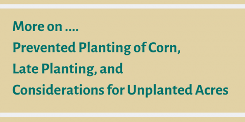 More on Preventing planting of corn, late planting, and considerations for unplanted acres