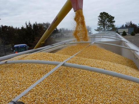 loading a grain truck