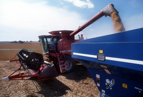 Combine dumping harvested soybeans in a truck