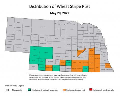 Wheat stripe rust map